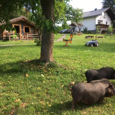Unsere Schweine Peggy und Rudi freuen sich auf Streicheleinheiten und gehen gerne spazieren.